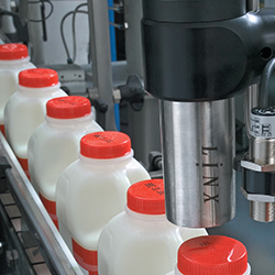 Milk jugs pass under Linx marking equipment
