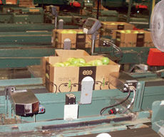 The case coders, some with dual printheads, imprint production codes on at least one side of the open-topped shippers before the containers are lidded, weighed and palletized.